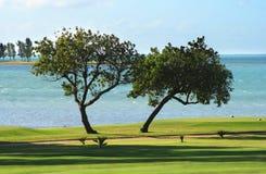 Árvores gêmeas Imagens de Stock