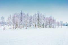 Árvores geadas Imagens de Stock Royalty Free