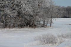 Árvores geadas ao lado do campo coberto de neve Imagens de Stock
