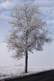 Árvores geadas ao longo do caminho Imagens de Stock Royalty Free