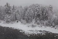 Árvores geadas bonitas Fotos de Stock