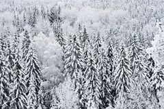 Árvores geadas e nevado Foto de Stock Royalty Free