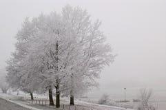 Árvores geadas em um dia enevoado Fotos de Stock Royalty Free
