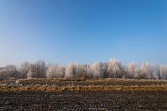 Árvores geadas no campo agrícola Fotos de Stock Royalty Free