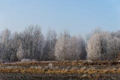 Árvores geadas no campo agrícola Imagem de Stock