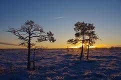 Árvores geladas no pântano Foto de Stock Royalty Free