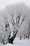 Árvores gelados Imagem de Stock
