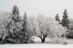 Árvores gelados fotografia de stock