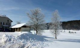Árvores gelados e casas em o inverno Foto de Stock