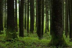 Árvores geométricas Fotografia de Stock Royalty Free