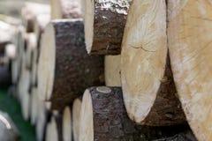 árvores grampeadas elled foto de stock