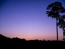Árvores grandes da silhueta na noite Fotos de Stock Royalty Free