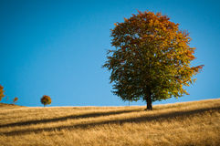 Árvores grandes e pequenas Fotografia de Stock