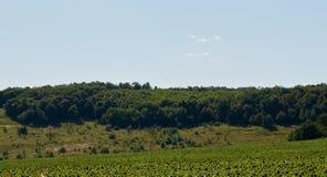 Árvores grandes no monte Imagens de Stock