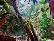 Árvores Greeny Imagens de Stock Royalty Free