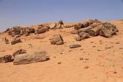 Árvores hirtos de medo em Sudão fotografia de stock royalty free