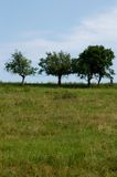 Árvores II Imagens de Stock