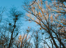 Árvores iluminadas Imagem de Stock