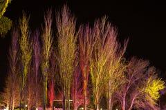 Árvores iluminadas por projetores coloridos Fotografia de Stock Royalty Free