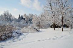 Árvores incrusted gelo Imagem de Stock
