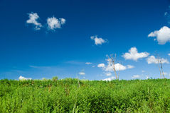 Árvores inoperantes Imagem de Stock