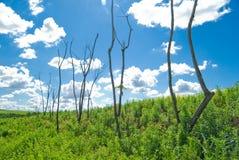 Árvores inoperantes Fotos de Stock Royalty Free