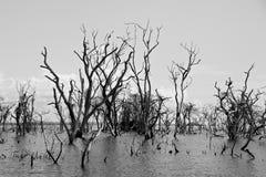 Árvores inoperantes Foto de Stock