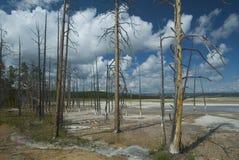 Árvores inoperantes Fotografia de Stock