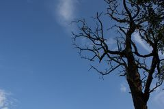 Árvores, árvores inoperantes Foto de Stock