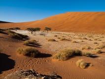Árvores inoperantes da acácia e dunas vermelhas do deserto de Namib Imagens de Stock Royalty Free