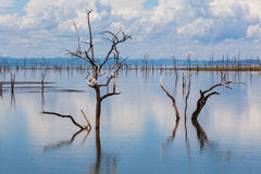 Árvores inoperantes de Kariba Fotografia de Stock Royalty Free
