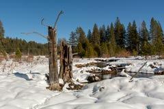 Árvores inoperantes e neve do parque estadual memorável de Donner imagem de stock