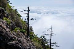 Árvores inoperantes e o mar das nuvens Imagens de Stock Royalty Free