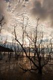 Árvores inoperantes e praia enlameada no por do sol Foto de Stock Royalty Free