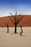 Árvores inoperantes em Deadvlei Foto de Stock