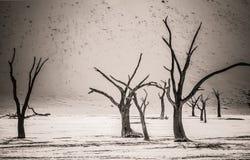 Árvores inoperantes em Deadvlei Fotos de Stock Royalty Free