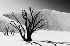 Árvores inoperantes em Deadvlei famoso Imagens de Stock