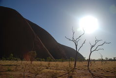 Árvores inoperantes em Uluru/rocha de Ayers Foto de Stock Royalty Free