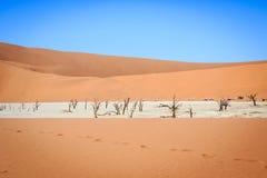 Árvores inoperantes em uma bandeja de sal no Deadvlei Fotografia de Stock