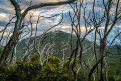Árvores inoperantes em uma floresta em Austrália após um bushfire Imagens de Stock Royalty Free