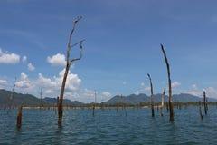 Árvores inoperantes entre a água no lago azul Fotografia de Stock Royalty Free