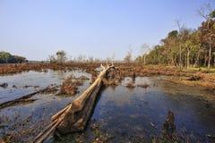 Árvores inoperantes na floresta Imagens de Stock
