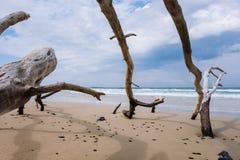 Árvores inoperantes na praia Fotografia de Stock