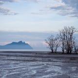 Árvores inoperantes na praia na maré baixa Foto de Stock Royalty Free