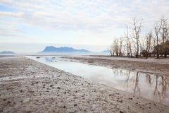 Árvores inoperantes na praia na maré baixa Fotografia de Stock Royalty Free