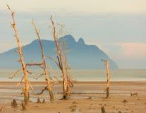 Árvores inoperantes na praia na maré baixa Fotos de Stock