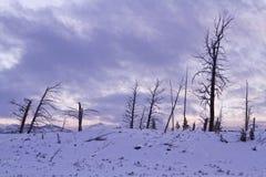 Árvores inoperantes no alvorecer Fotos de Stock