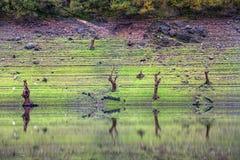 Árvores inoperantes no banco do reservatório Imagens de Stock