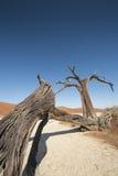 Árvores inoperantes no deserto Fotos de Stock Royalty Free