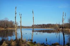 Árvores inoperantes no lago Imagem de Stock Royalty Free